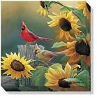 Sunny Side Up-Cardinals Wrapped Canvas By Susan Bourdet  10.5 x 10.5