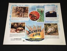 DISNEY'S SECRETS OF LIFE (1956) GORGEOUS INSECT HALF-SHEET - ROLLED XF!