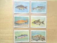 1935  Player FRESH-WATER FISHES coarse fishing set 25 cards Tobacco Cigarette