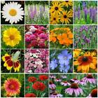 ALL PERENNIAL Wildflower Mix 15 Species Plant in Summer/Fall Non-GMO 500+ Seeds