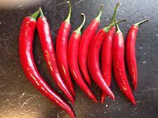 CHILLI  Samen Chilisamen *Fireflame* sehr!!! scharf unbehandelt 20 Samen
