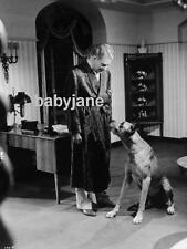 031 NELSON EDDY IN HIS PAJAMAS AND ROBE W/ DOG FROM CHOCOLATE SOLDIER PHOTO