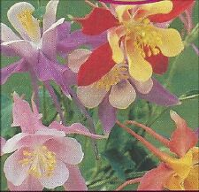 Aquilegia - McKana's Giant Mix- 50 fresh seeds - Columbine