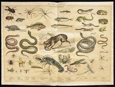 Rare 1853ca - Les animaux nuisibles - Planche encyclopédique, scolaire affiche