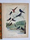 Vtg Original Print Plate #88 Swallow Birds of New York 1916 Fuertes Nature art