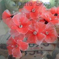 Multicolor Hibiscus Flower Nylon Party-Wedding-Decoration X-mas 110V LightString eBay