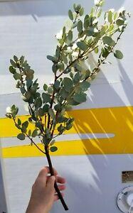 """6 Manzanita Branch 15""""-19"""" Fresh Cut Centerpiece Wedding Craft Decor Vivarium"""