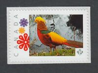 GOLDEN PHEASANT exotic bird Picture Postage Canada 2014 p76bd5/1