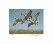 North Dakota #1 1982 State Duck Stamp Print Canada Geese by Richard Plasschaert