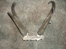 Antelope Horns Set Antler Antlers Deer Elk Moose Taxidermy Knife Handles