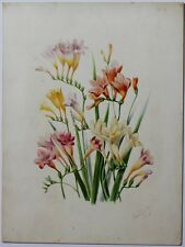 JR GUILLOT FREESIAS HYBRIDES Aquarelle originale publiée in Revue Horticole 1907