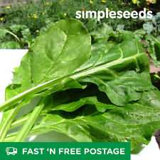 Spinach Perpetual 50 seeds – 100% Organic –Free Post – Easy to Grow