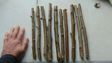 Aussie,Hybrid ,Salix,Willow,Tree,cuttings,10 pieces,Fast growing,large diameter