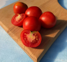Glacier Tomato Seeds - Open pollinated very early variety 100+