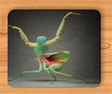 Insect Life Brown & Orange Praying Mantis Mouse Pad hg54sa