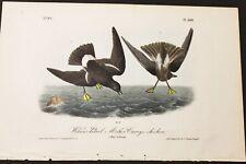 AUDUBON'S BIRDS of AMERICA - WILSON'S PETREL - First Edition Octavo Plate 460