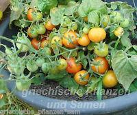 🔥 🍅 HOUSE Tomate Zimmertomate Topf-Tomate 10 Samen Tomaten für Balkon
