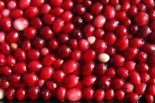 Cranberry (30 seeds) fresh this season's harvest