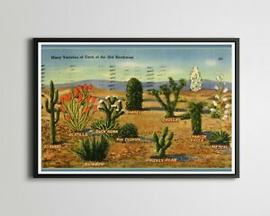 """1946 Cacti of the Old Southwest POSTER! (up to 24""""x36"""") - Cactus - Vintage - Art"""