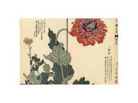 Kono Bairei - Keshi or opium poppy Kyoto 1900 Print 60x80cm