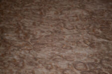Eucalyptus Burl Raw Wood Veneer Sheet 125 X 17 Inches 142nd R7777 44