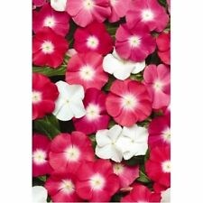 Vinca Seeds 50 Seeds Vinca Pacifica Xp Halo Mix