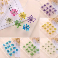 12pcs Pressed Real Dried Daisy Flowers DIY Art Crafts Resin Jewelry Making-Tool^