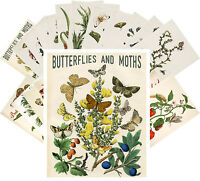 Postcards Pack [24 cards] Butterfly and Moths Vintage Posters Art Deco CC1055