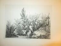 Eugène BLERY 1805-1887 GRAVURE PAYSAGE FEUILLAGE BOTANIQUE BARBIZON MERYON 1840