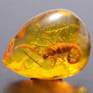 Harz Scorpion Bernstein Insekt Amber Baltic Edelstein Halskette AnhängerSammlung