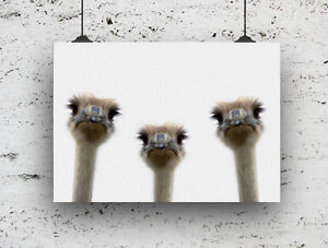 OIL PAINTING EFFECT EMU BIRD FUNNY PRINT WALL ART HIGH QUALITY A4 IMAGE