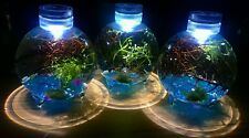 Enclosed self sustaining water plant Eco system! gift idea, Christmas, aquarium