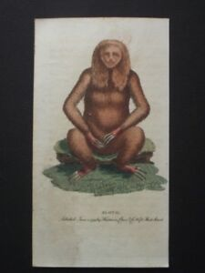 SLOTH -  ORIGINAL HARRISON CLUSE 1799 HAND COLORED COPPER PLATE ENGRAVING
