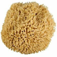 New Just Whoa. Ultra Soft & Really Really Big Sea Wool Bath Sponge