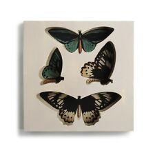 Nathan Murrell Collection Square Butterfly Shadow Box