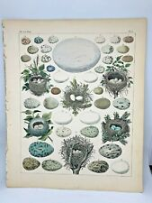 Antique large hand-colored print 1843.Oken's Naturgeschichte Plate 4 Nests Eggs