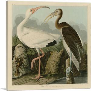 ARTCANVAS White Ibis Canvas Art Print by John James Audubon