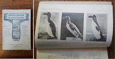 RIO - Rivista Italiana Di Ornitologia - 1914 - 1-2