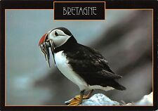 BT9297 animals animaux the puffin macareux moine