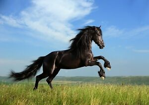 HORSE BLACK RUNNING Poster Print A6 A5 A4 A3 A2 A1 A0