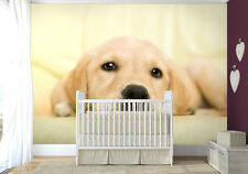 Large bedroom paper wallpaper 254x183cm wall mural Golden retriever puppy dog