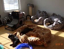 SPONSOR RELOCATED OUTSIDER CATS FEED VET RECEIVE SANCTUARY COLOR PHOTO Donate