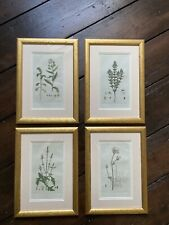 More details for beautiful set of 4 hand coloured 19th century botanical prints engravings