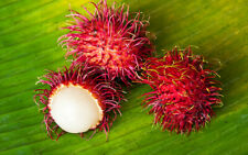 5 PCS Rambutan Bonsai Seeds Red Fruits Plant Litchi Very Delicious Giant Tree