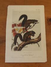 Audubon. Quadrupeds. Octavo. Long Haired Squirrel.