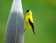 Metal Refrigerator Magnet Golden Finch Feeding Bird Yellow Black Birds