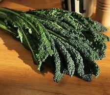 2000 Graines Légumes Chou à feuilles Scarlet Kale Env