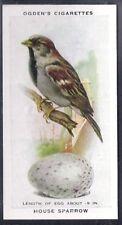 OGDENS-BRITISH BIRDS & THEIR EGGS-#38- HOUSE SPARROW
