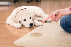 LITTLE ACCIDENT Pet Powder - Pee & Poop ECO Odour Eliminating Carpet Deodorisor