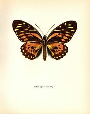 "1963 Vintage PROCHAZKA BUTTERFLY ""DOUBLEDAY"" ZAGREUS COLOR offset Lithograph"